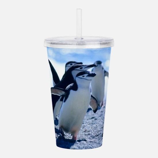 Cute Penguins Acrylic Double-wall Tumbler
