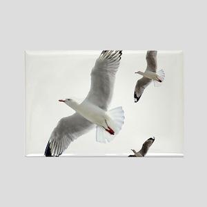 3 Gulls in Flight copy Magnets