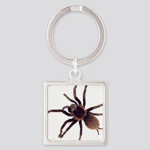 Hairy Brown Tarantula Keychains