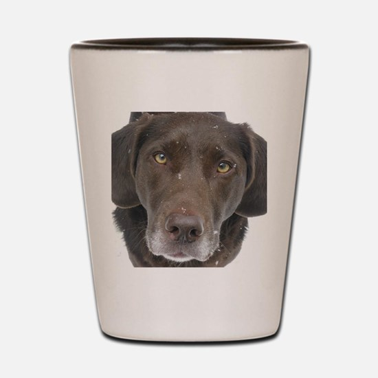 Chocolate Lab  Shot Glass