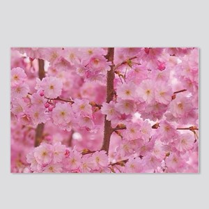 Cherry Blossoms pink Postcards (Package of 8)