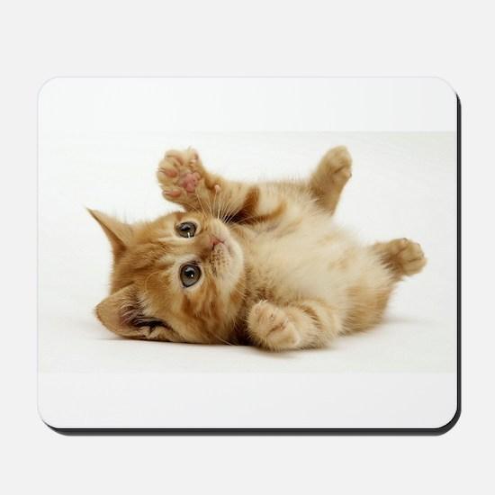 Orange kitten Mousepad