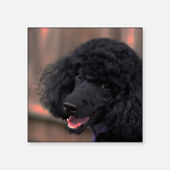"Cute Poodle puppies Square Sticker 3"" x 3"""