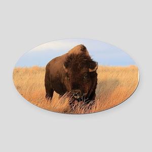 Bison on the plains Oval Car Magnet