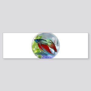 Colorful Betta Fish in a Bubble Bumper Sticker