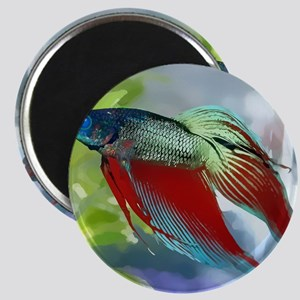 Colorful Betta Fish in a Bubble Magnets