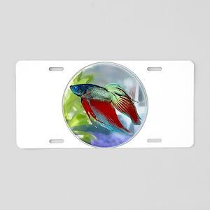 Colorful Betta Fish in a Bu Aluminum License Plate
