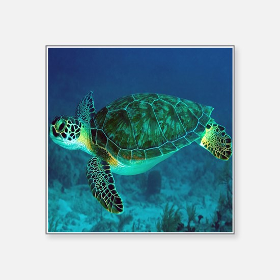 Ocean Turtle Sticker