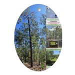 Large tall trees #odcctv Ornament (Oval)