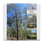 Large tall trees #odcctv Tile Coaster