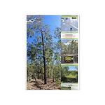 Large tall trees #odcctv 5'x7'Area Rug