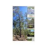Large tall trees #odcctv Area Rug