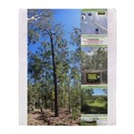 Large tall trees #odcctv Throw Blanket