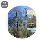 Large tall trees #odcctv 3.5