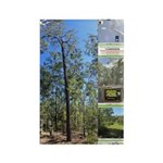 Large tall trees #odcctv Magnets