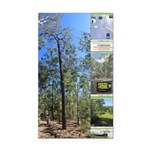 Large tall trees #odcctv Rectangle Car Magnet