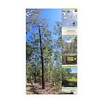 Large tall trees #odcctv Sticker