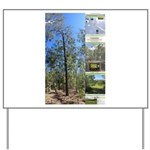 Large tall trees #odcctv Yard Sign