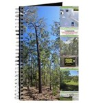 Large tall trees #odcctv Journal
