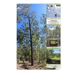 Large tall trees #odcctv Postcards (Package of 8)