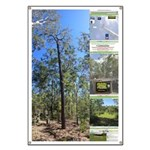 Large tall trees #odcctv Banner