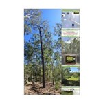 Large tall trees #odcctv Posters
