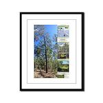 Large tall trees #odcctv Framed Panel Print