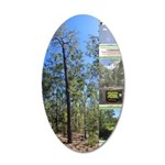 Large tall trees #odcctv Wall Decal