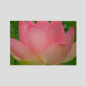 Sacred Lotus Flower Rectangle Magnet