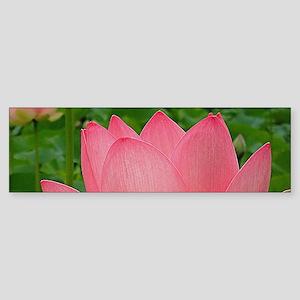 Sacred Lotus Flower Bumper Sticker