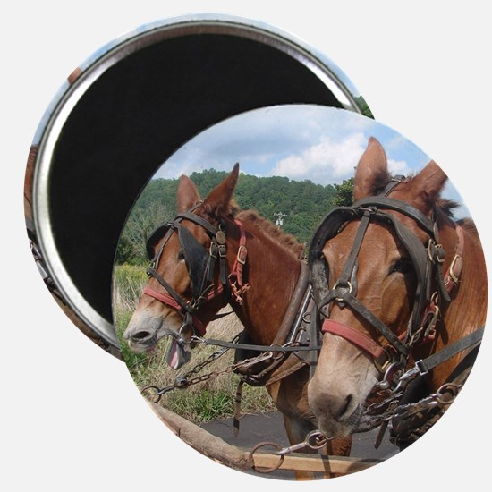 Two Mules for Sister Sue Magnet