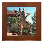 Giraffe (SCP) Framed Tile