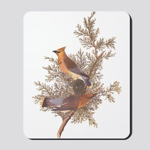 Cedar Waxwing Birds Mousepad