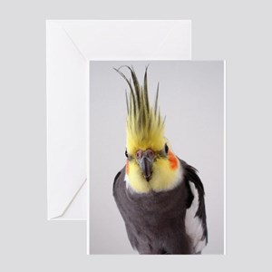 Cockatiel Photograph Greeting Cards
