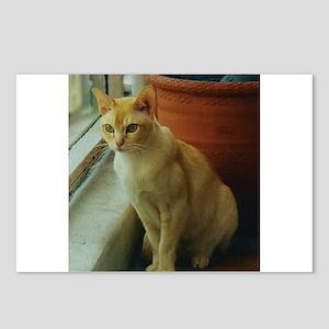 Red Burmese Cat Postcards (Package of 8)