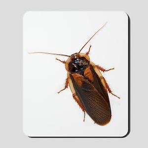 Male Dubia Roach Mousepad