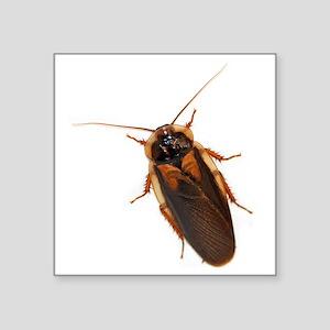 """Male Dubia Roach Square Sticker 3"""" x 3"""""""