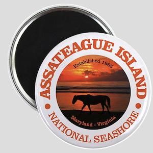 Assateague Island Magnets