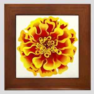 Marigold Flower Framed Tile