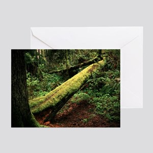 Fallen Tree Greeting Cards