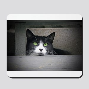 Schubert the cat daydreaming Mousepad