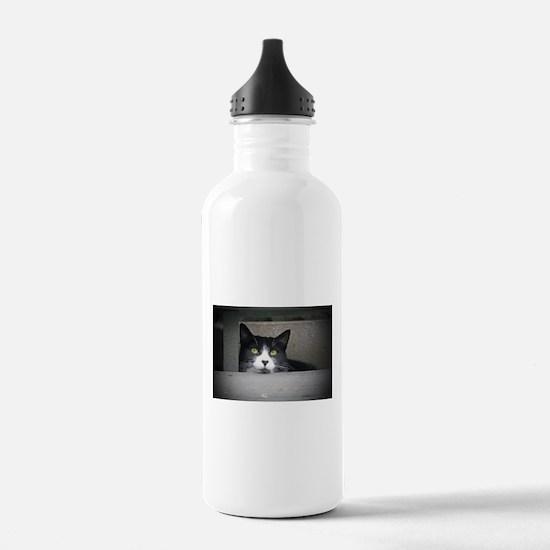 Schubert the cat daydr Water Bottle