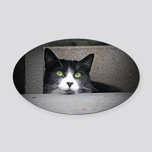 Schubert the cat daydreaming Oval Car Magnet