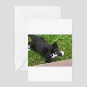 Schubert the playing cat Greeting Cards