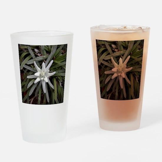 White Alpine Edelweiss Flower Drinking Glass