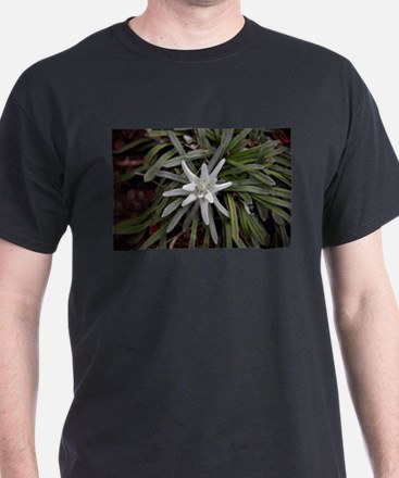 White Alpine Edelweiss Flower T-Shirt