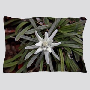 White Alpine Edelweiss Flower Pillow Case