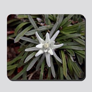 White Alpine Edelweiss Flower Mousepad