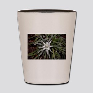 White Alpine Edelweiss Flower Shot Glass
