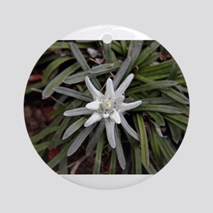 White Alpine Edelweiss Flower Ornament (Round)